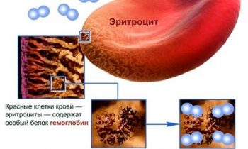 перенос кислорода эритроцитами